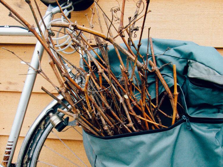 Druiventakken in fietstas