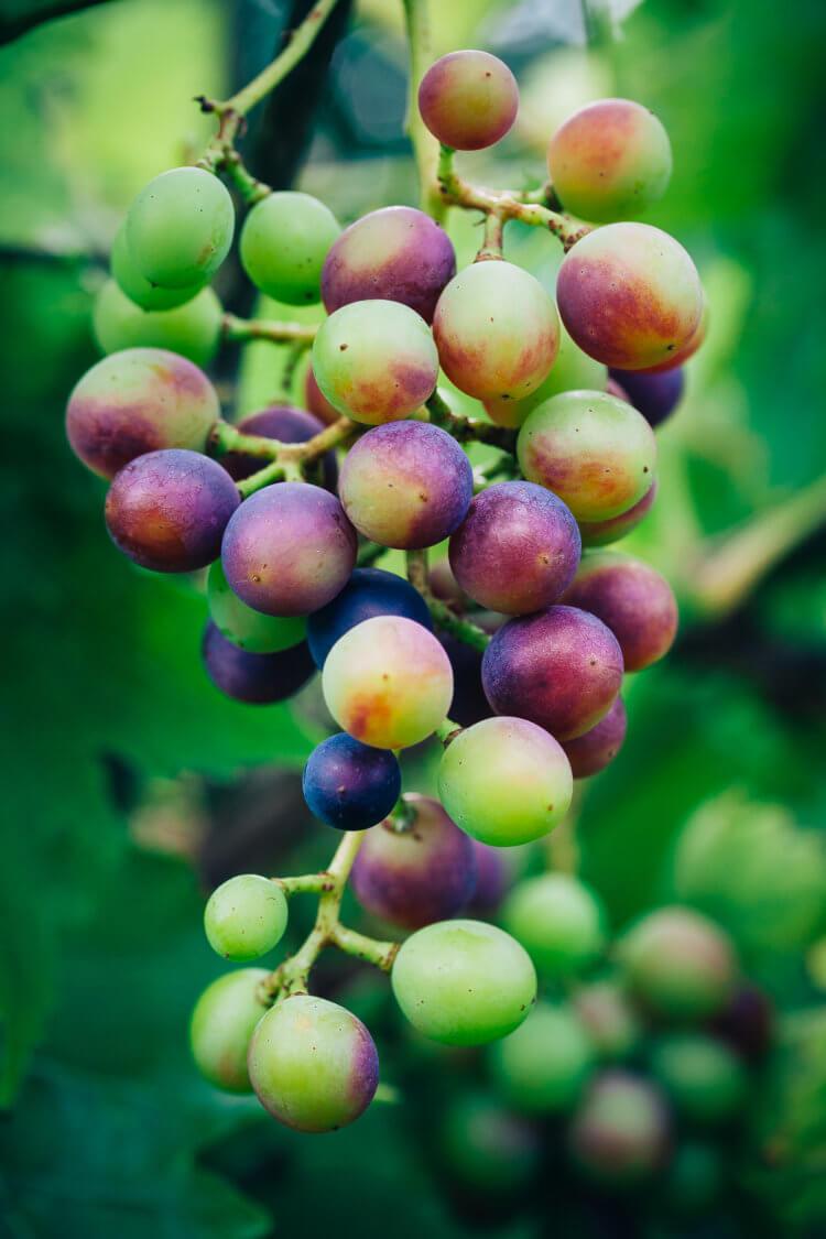 Druiven bestellen