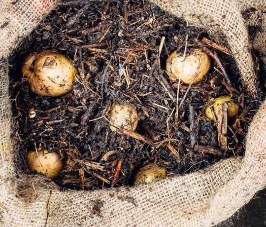 Aardappels in een zak kweken