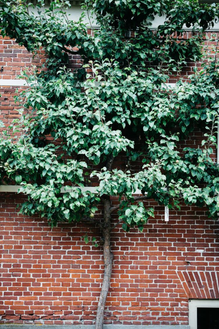 Zuiderzeemuseum, leiboom