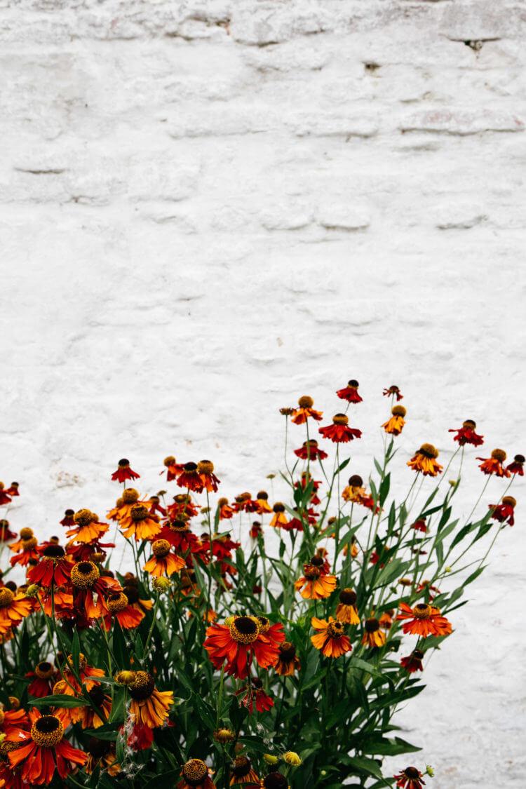 Zuiderzeemuseum, ommuurde tuin met bloemen