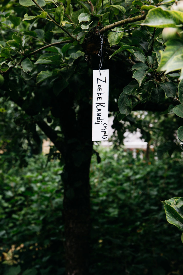 Zuiderzeemuseum, oud appelras