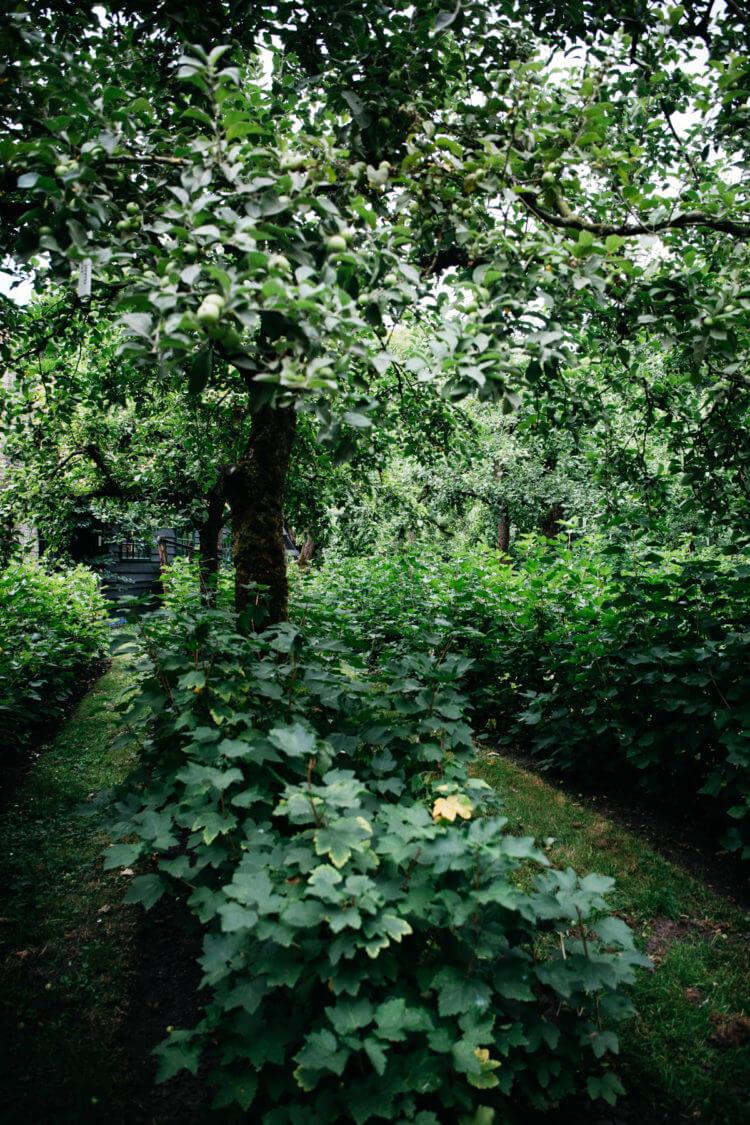 Zuiderzeemuseum, boomgaard width=