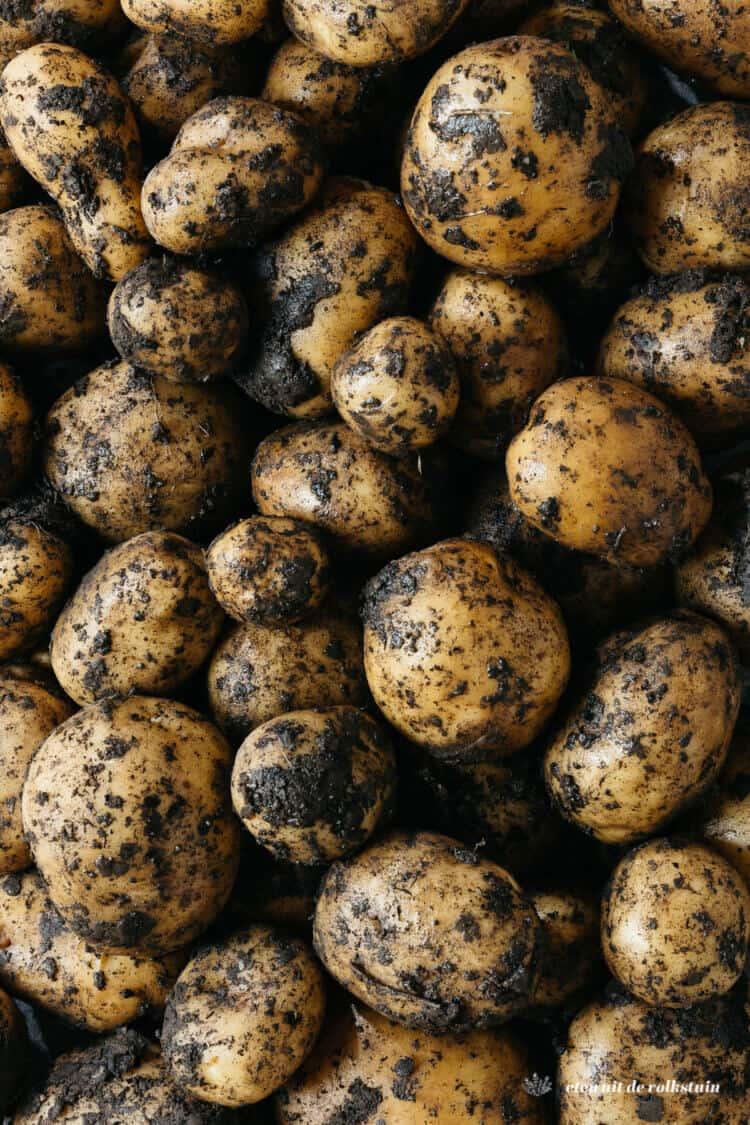 Aardappelen close-up