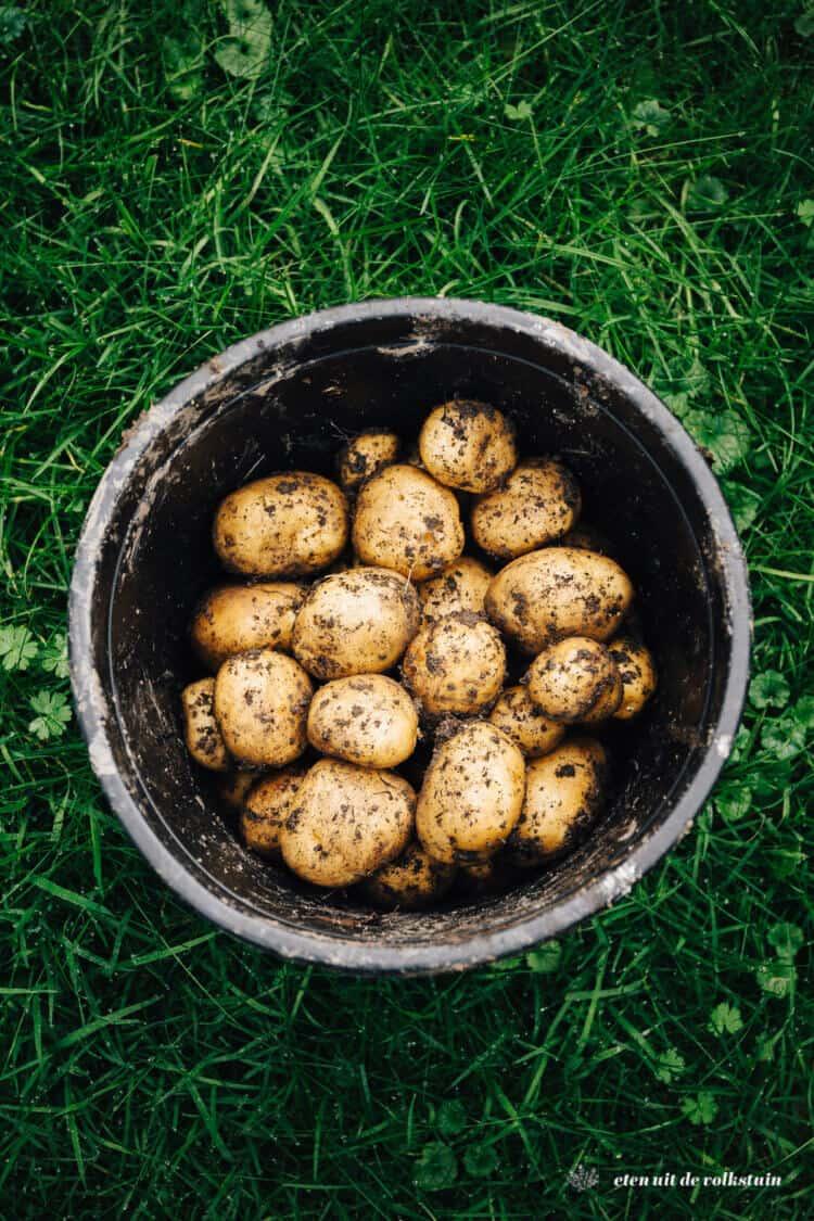 Aardappelen in de tuin