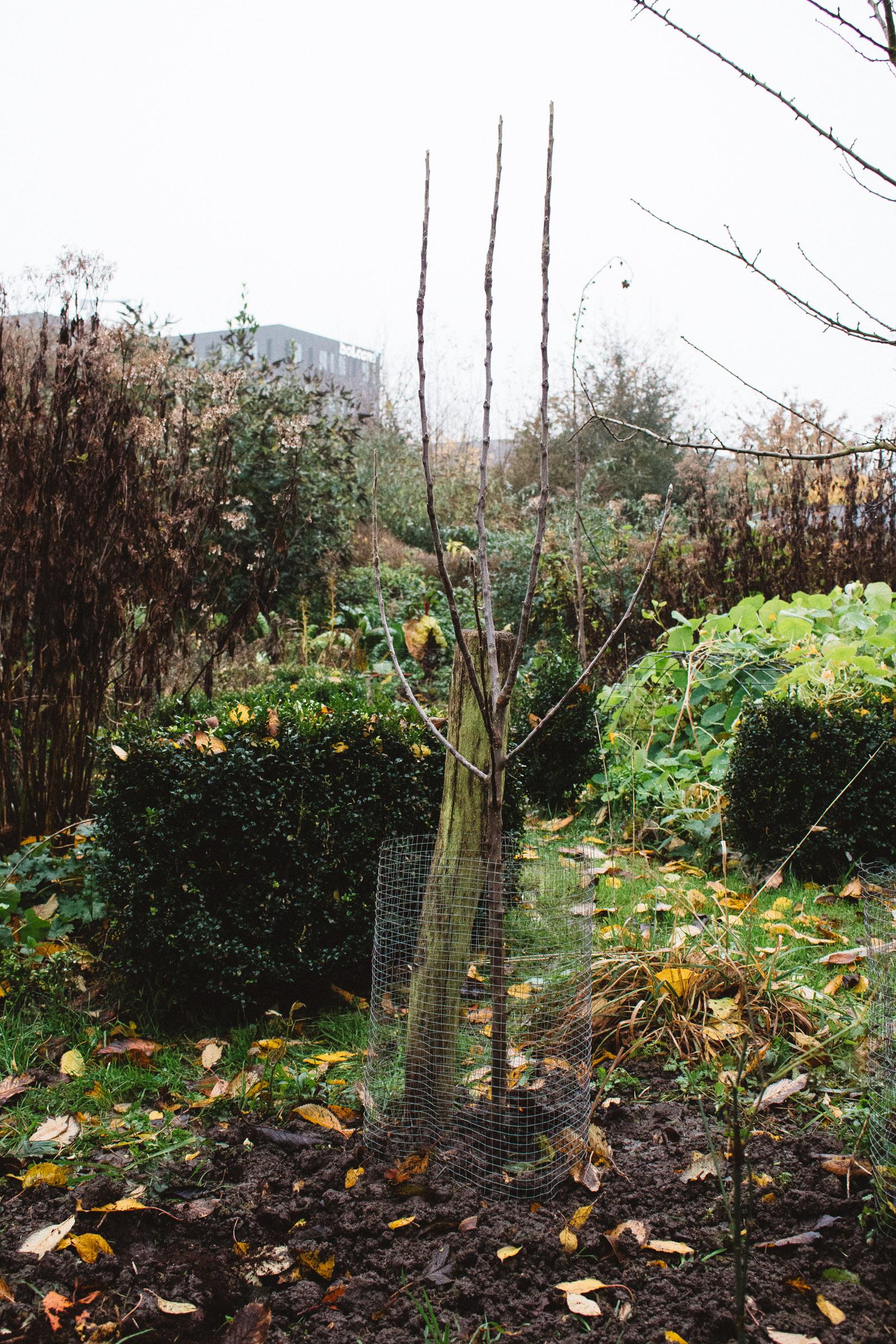Appelboom in de tuin